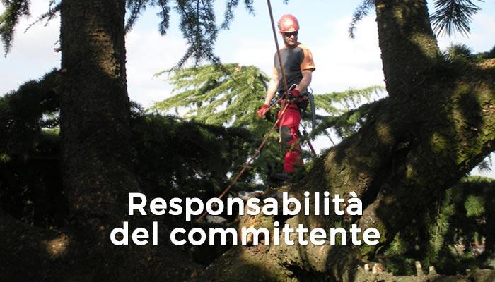 Alberi - Responsabilità del committente