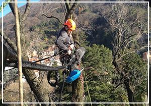 consolidamento-alberi-300x210