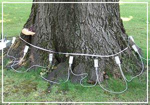 valutazioni-di-stabilita-alberi-300x210