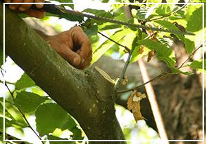 potatura-alberi-300x210