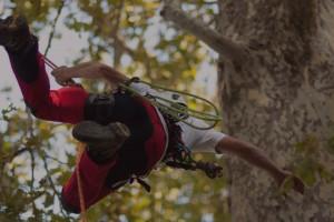 Tree Climbing per Potatura Alberi Ornamentali