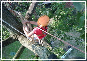 Tree Climbing Ricreativo