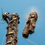 Abbattimento controllato alberi ad alto fusto: cos'é e quando serve