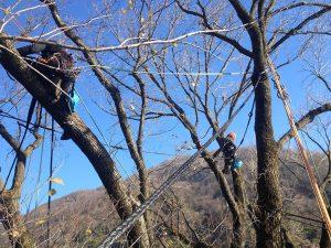 consolidamento alberi