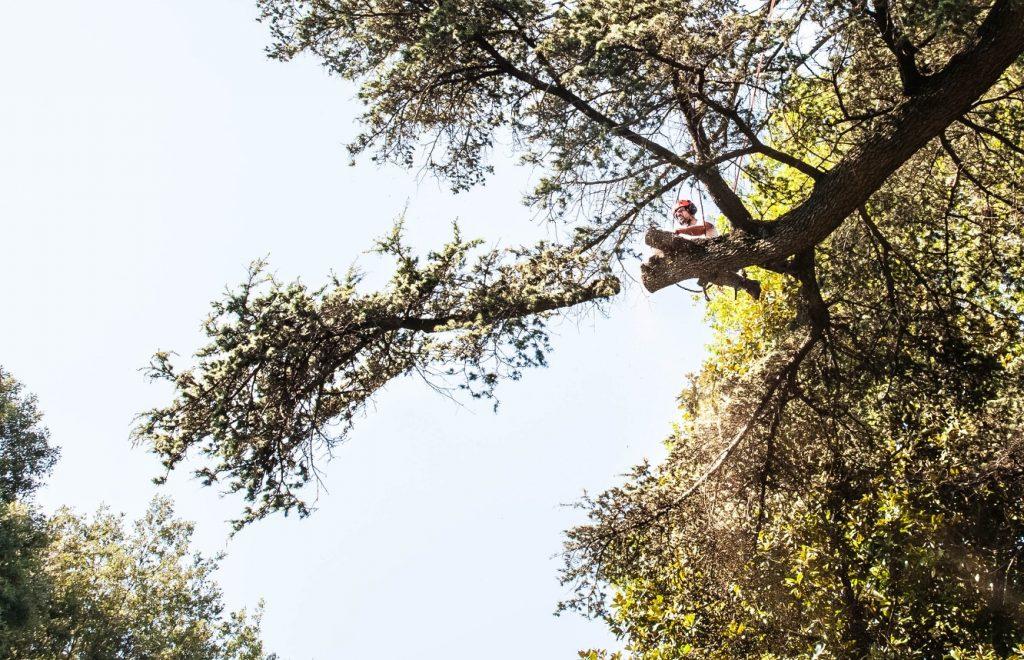 abbattimento-albero-cernobbio-001