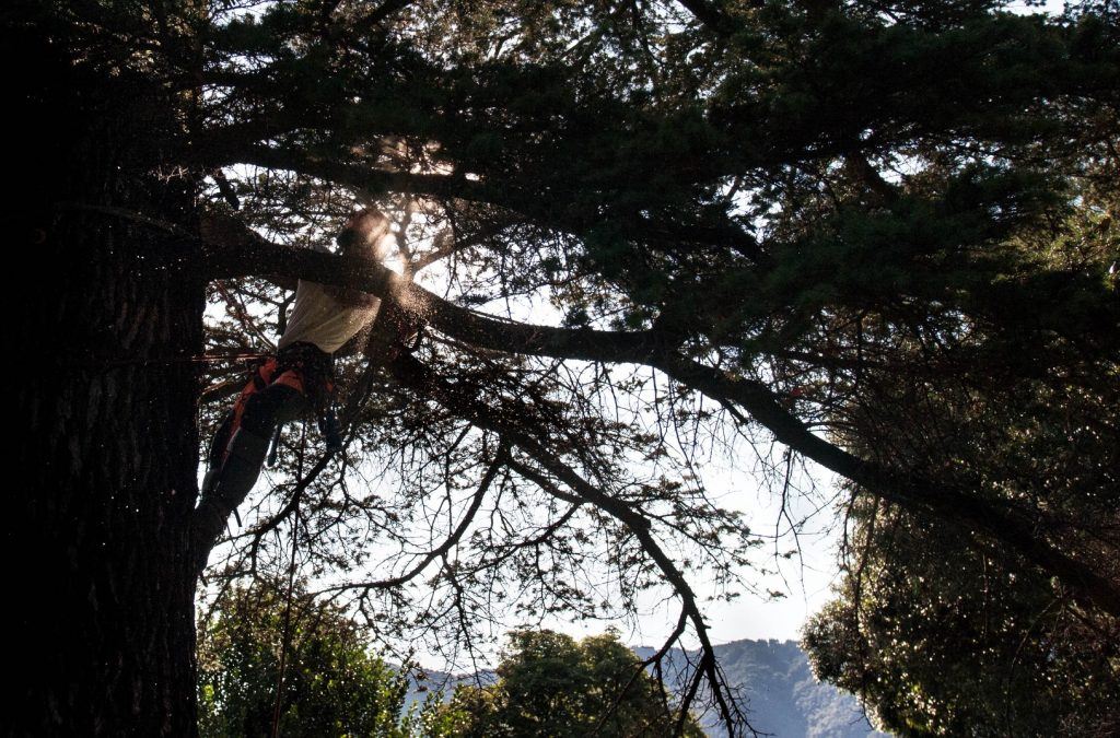 abbattimento-albero-cernobbio-002