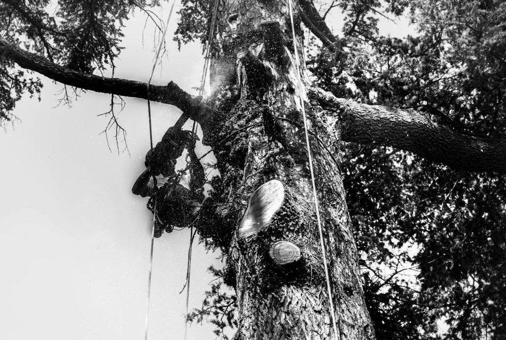 abbattimento-albero-cernobbio-005