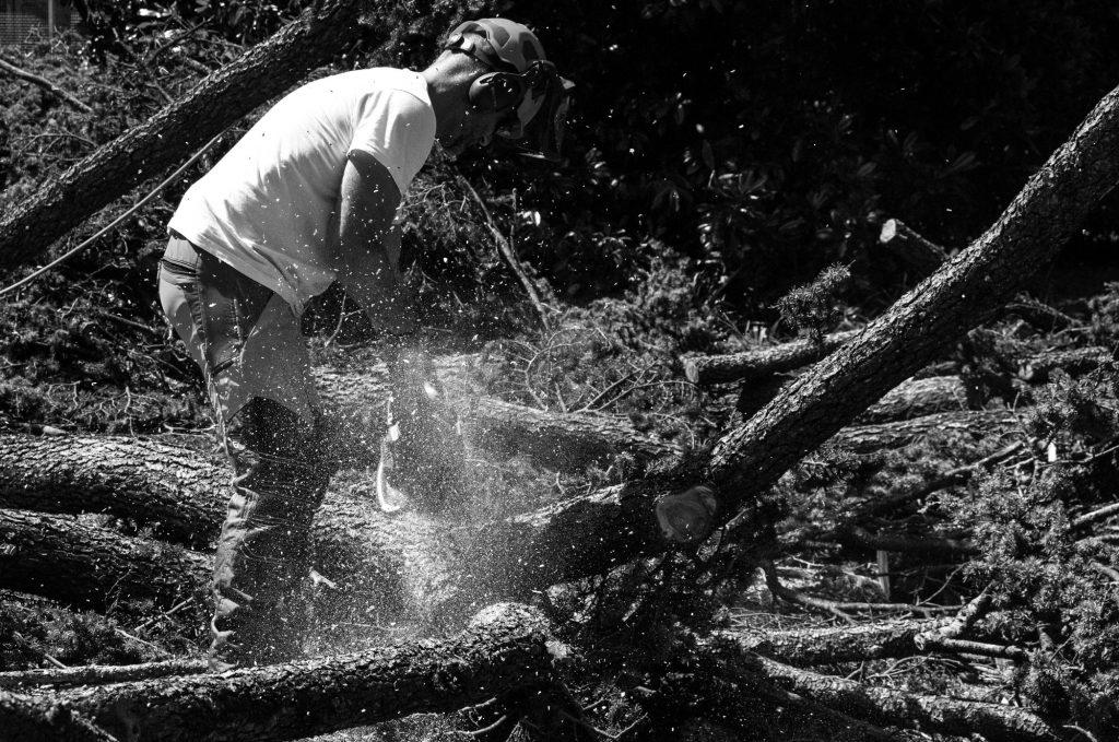 abbattimento-albero-cernobbio-006