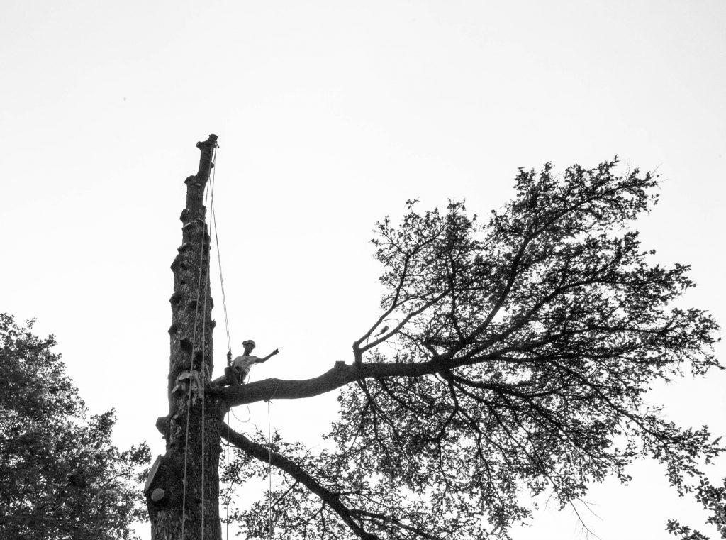 abbattimento-albero-cernobbio-008