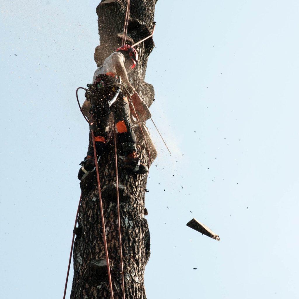 abbattimento-albero-cernobbio-011