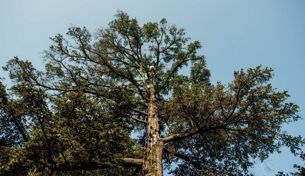 abbattimento-albero-cernobbio000