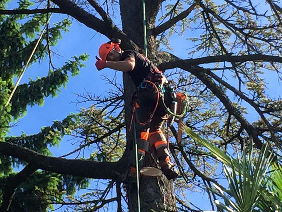 abbattimento-albero-secco-eupilio-003