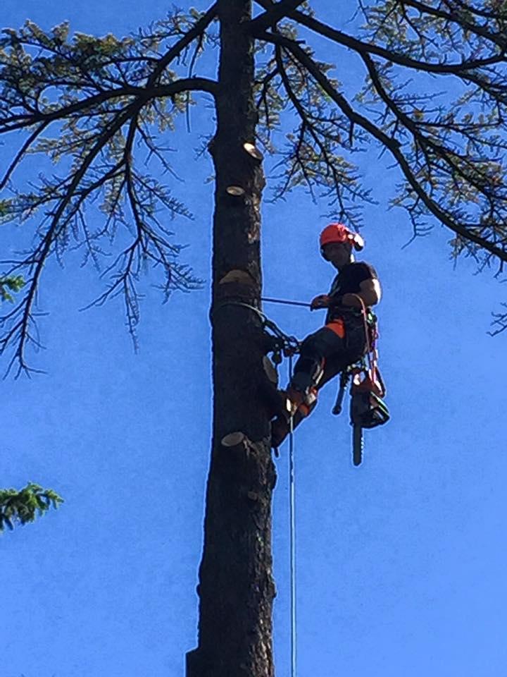 abbattimento-albero-secco-eupilio-005
