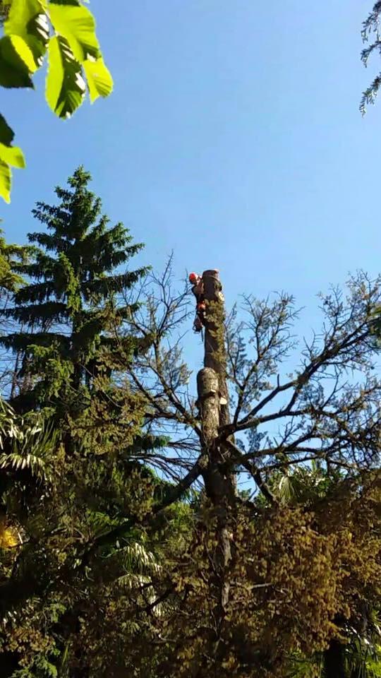 abbattimento-albero-secco-eupilio-006