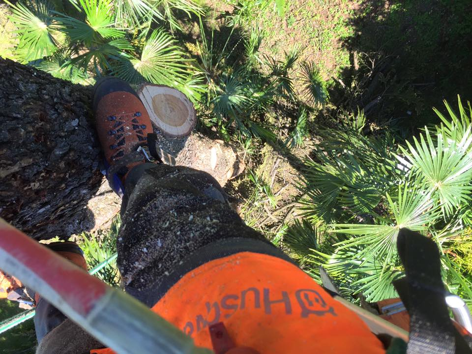 abbattimento-albero-secco-eupilio-007