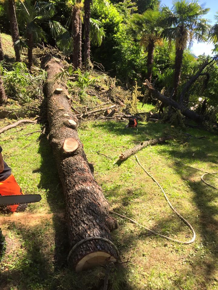 abbattimento-albero-secco-eupilio-009