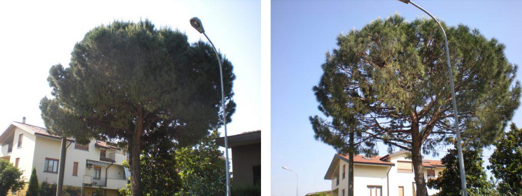 potatura-alberi-001
