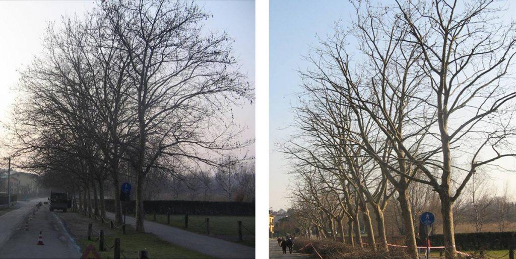 potatura-alberi-002