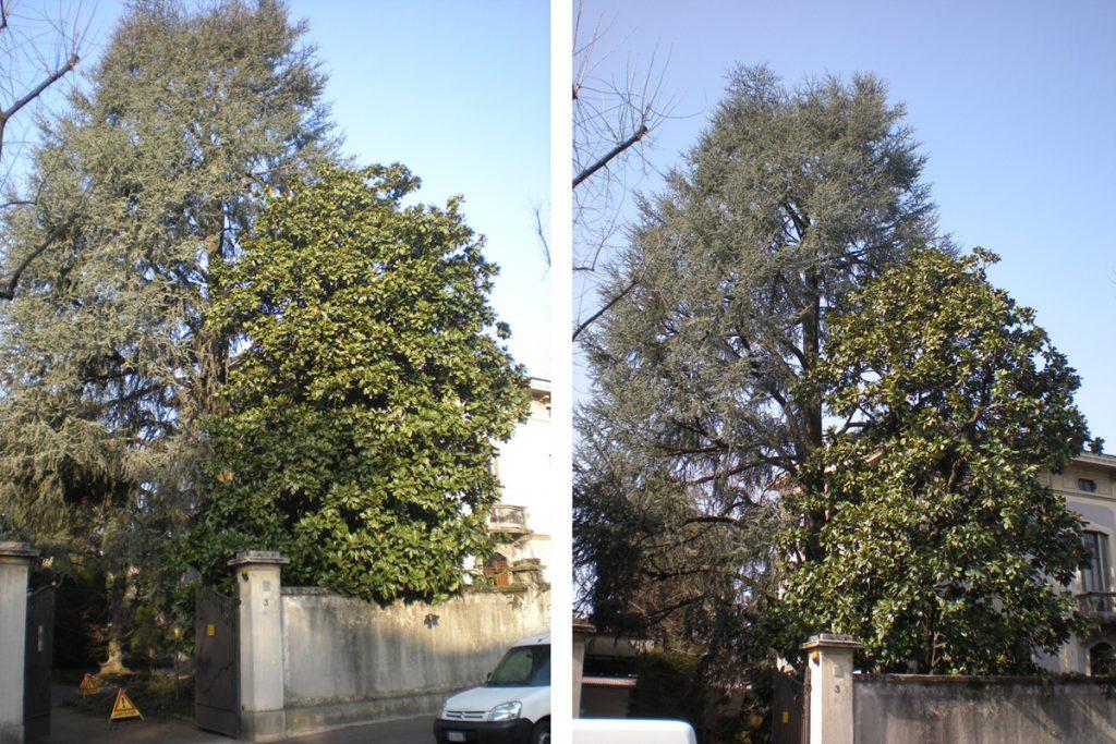potatura-alberi-003