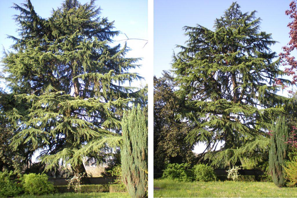 potatura-alberi-004