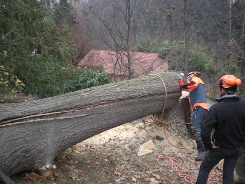 abbattimenti-alberi-tree-climbing