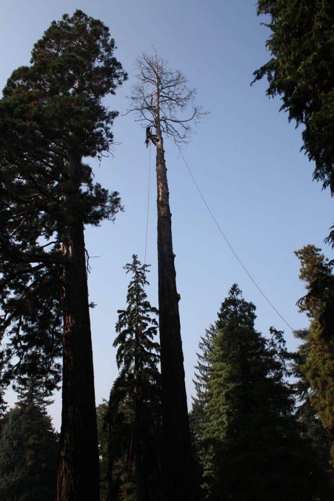 abbattimenti-alberi-tree-climbing1