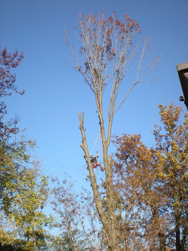 abbattimenti-alberi-tree-climbing2