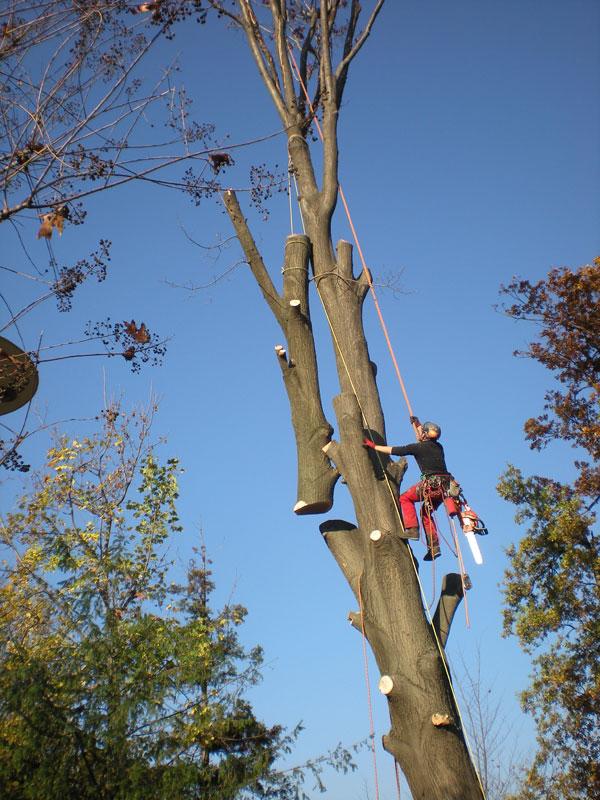 abbattimenti-alberi-tree-climbing3