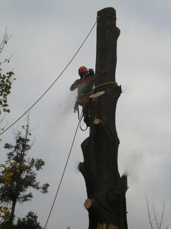 abbattimenti-alberi-tree-climbing4