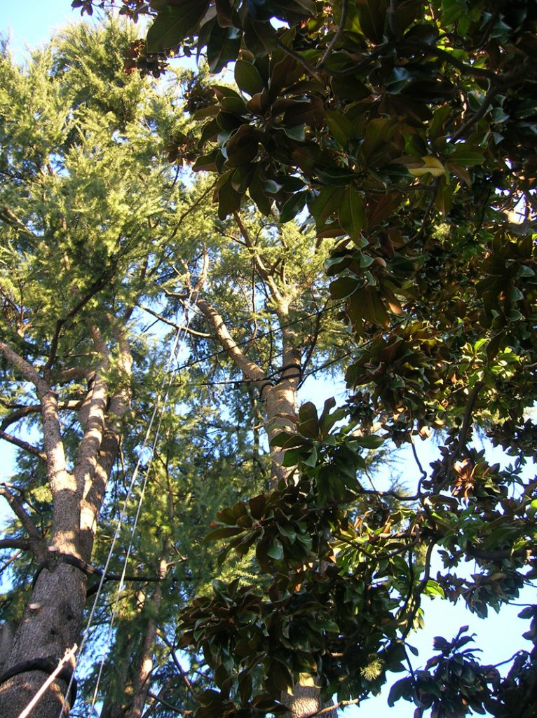 consolidamento-alberi-001