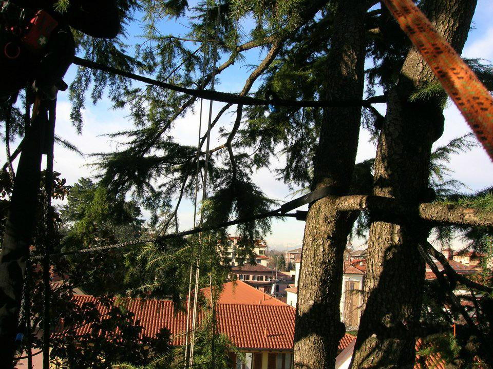 consolidamento-alberi-002