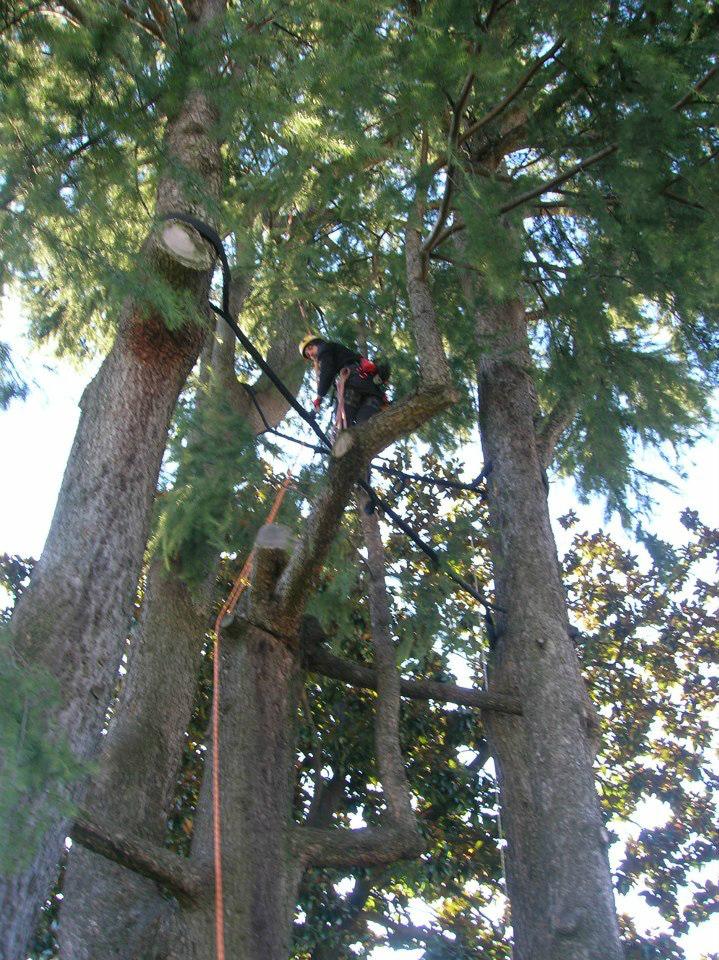 consolidamento-alberi-003