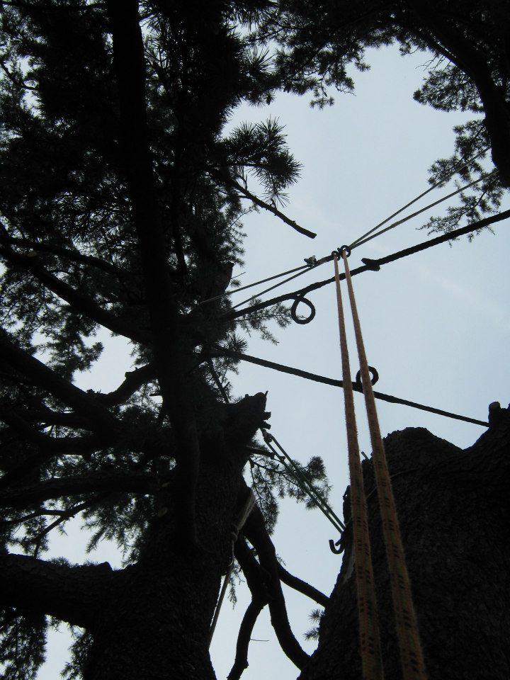 consolidamento-alberi-004