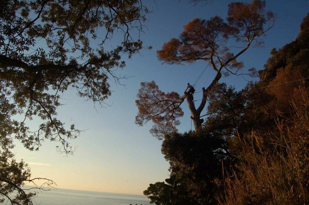 potature-abbattimenti-treeclimbing-004