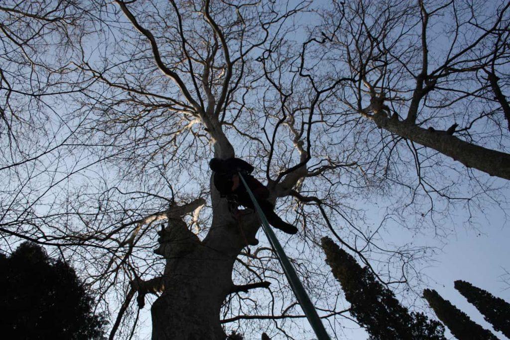 potature-abbattimenti-treeclimbing-005