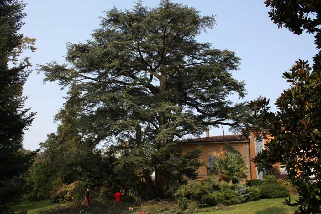 potature-abbattimenti-treeclimbing-006