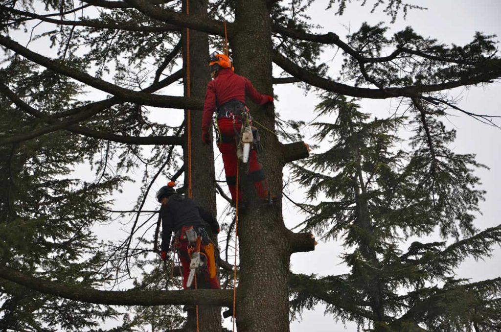 potature-abbattimenti-treeclimbing-009