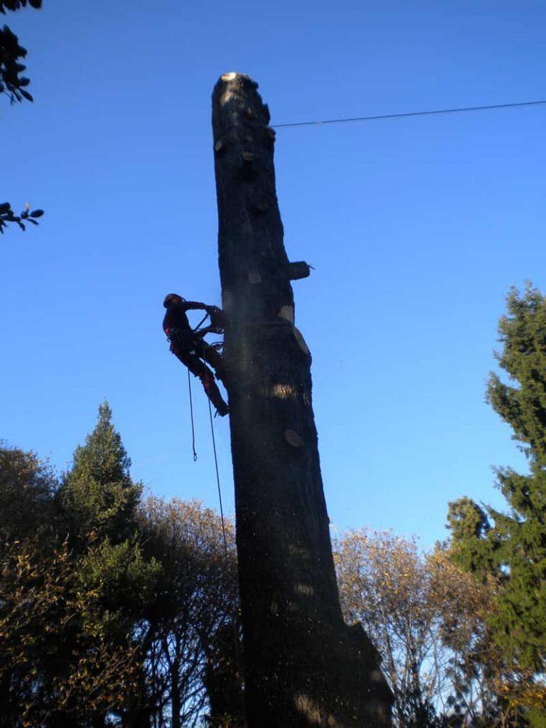 potature-abbattimenti-treeclimbing-012