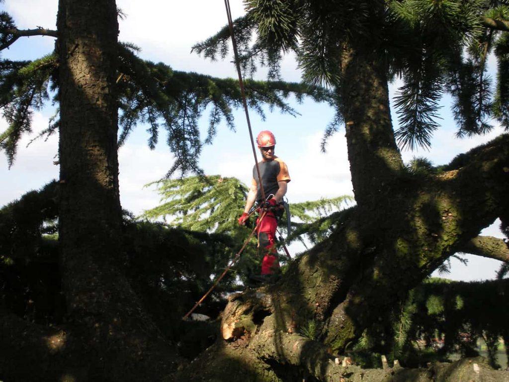 potature-abbattimenti-treeclimbing-013