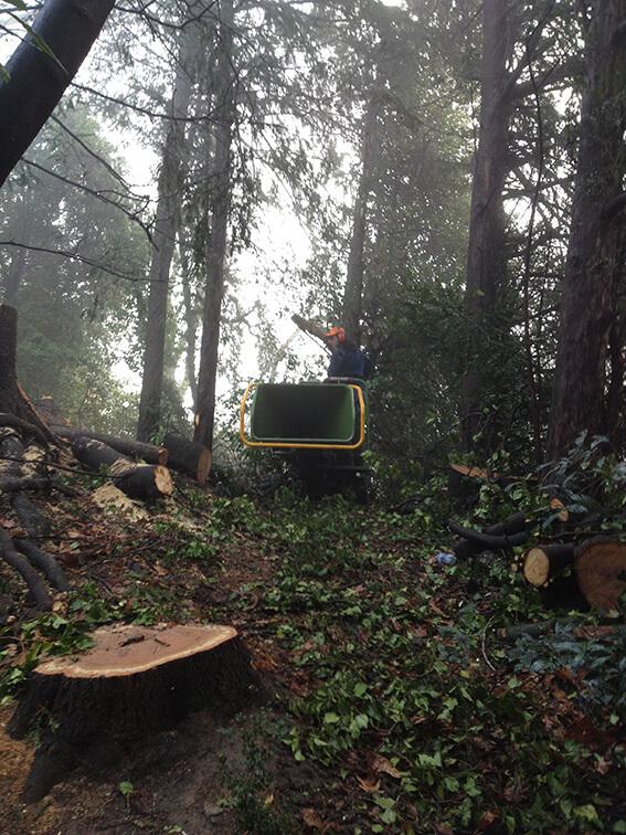 smaltimento-alberi