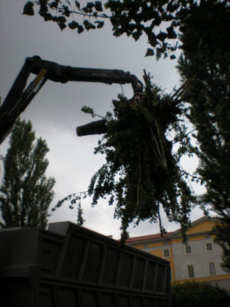 smaltimento-alberi4