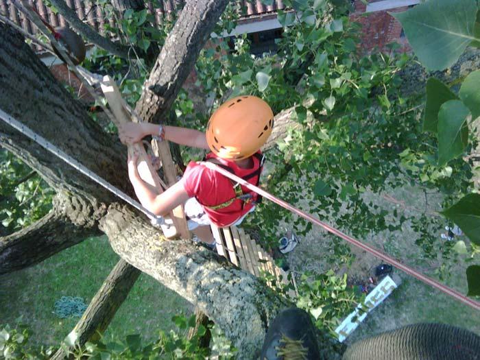 Tree climbing ricreativo bambini