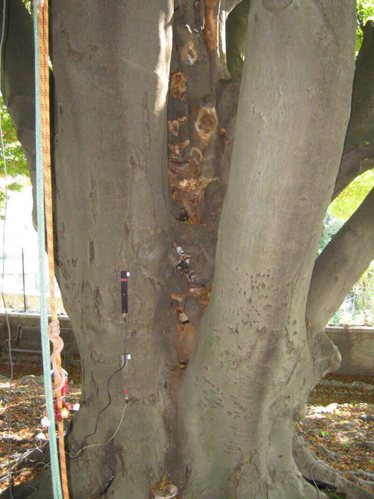 valutazioni-di-stabilità-alberi3