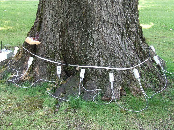 valutazioni-di-stabilità-alberi6