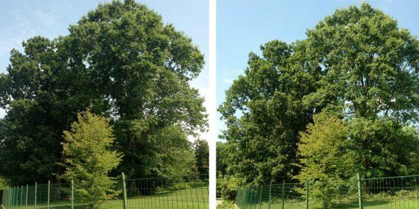 potatura-alberi-005